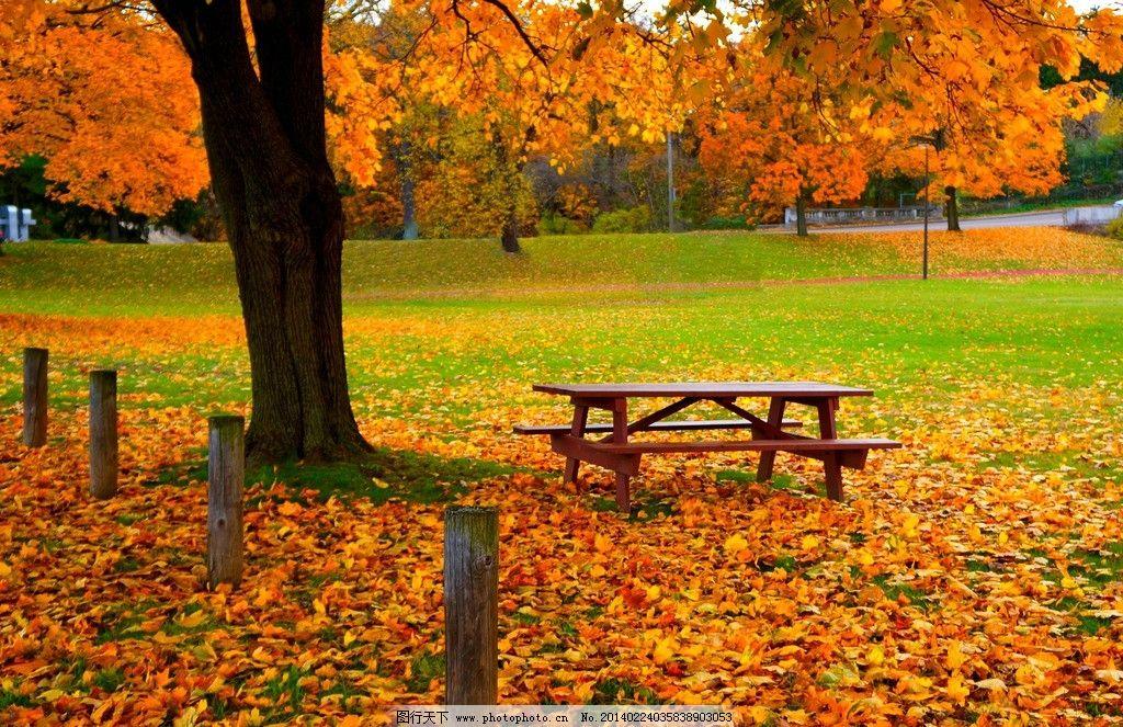 落叶 秋天 秋季 树叶 黄色 大树 木桩 草地 长椅 木椅 美丽 自然 欧式