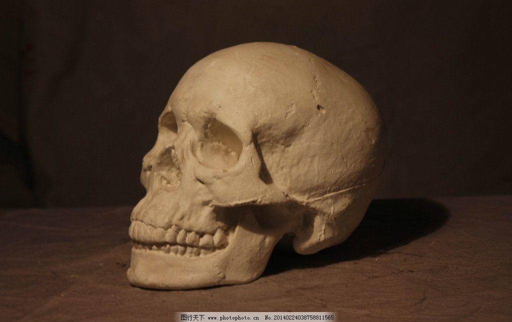 骷髅头 石膏像 美术 素描 侧面 美术绘画 摄影