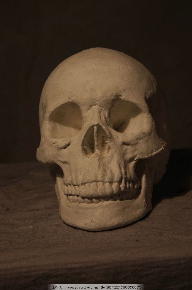 骷髅头 石膏像 美术 素描 正面 雕塑 建筑园林 摄影 72dpi jpg