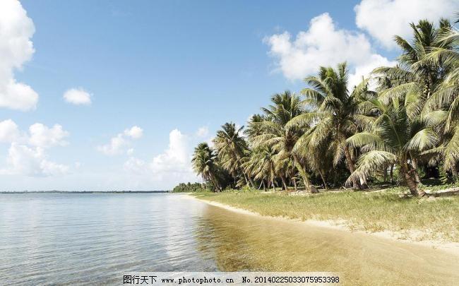 边椰子树图片素材