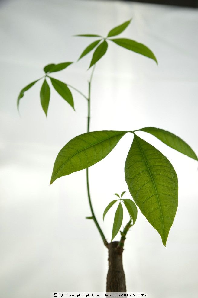 绿植简笔画线描