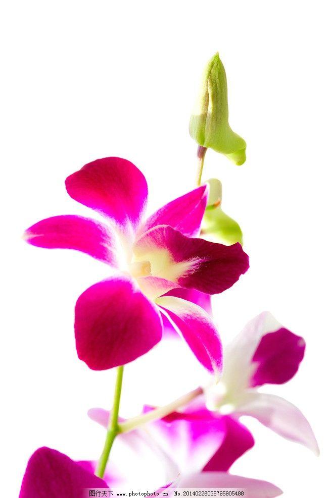 花朵 唯美 兰花 自然 绿色 背景 花草 生物世界 摄影