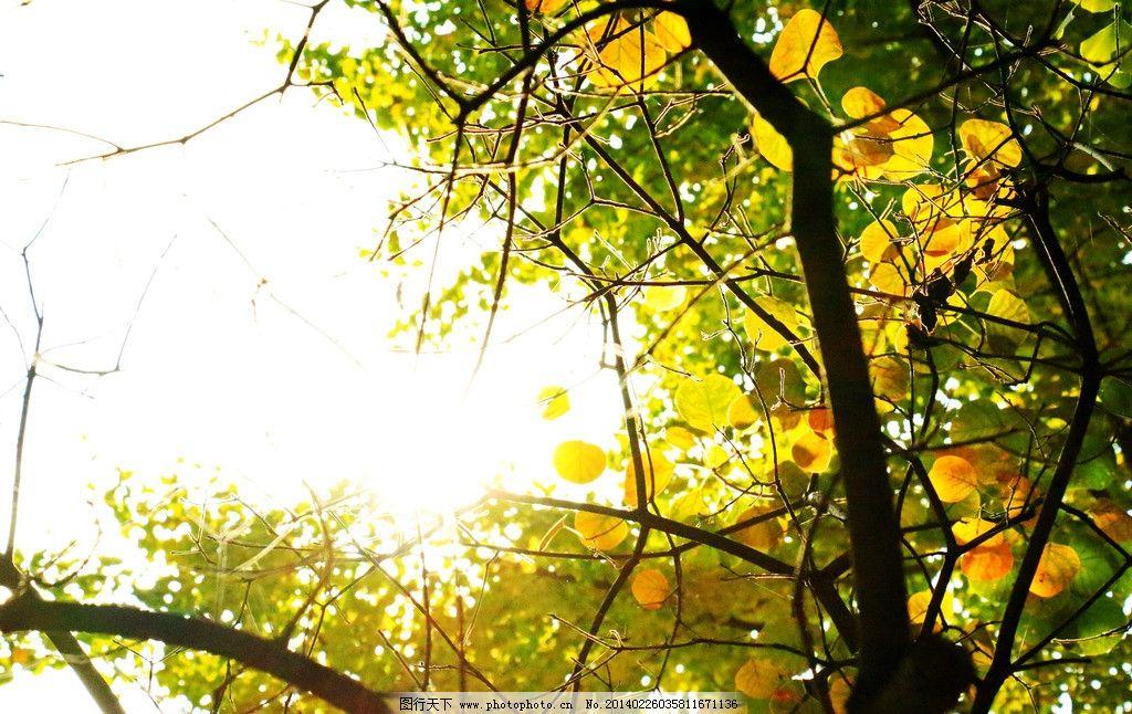 香山艳阳 香山 秋天 阳光 树枝 黄叶 绿叶 树木树叶 生物世界 摄影 72