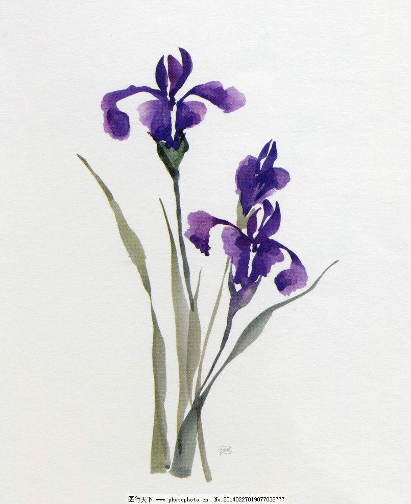 手绘花 花卉 花朵 花头 花鸟 手绘 花 水彩 兰花 绘画书法 文化艺术