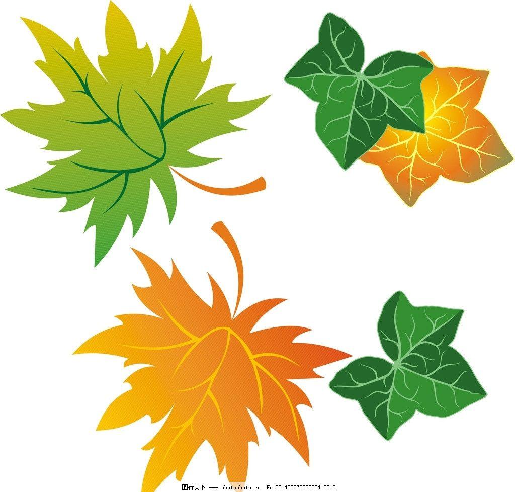 树木树叶 各种树叶 叶子 绿色叶子 树叶背景 一片树叶 树枝 花纹花边