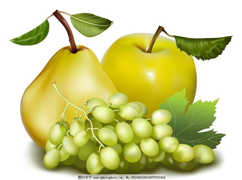 水果 手绘水果 葡萄 苹果 梨 水果矢量
