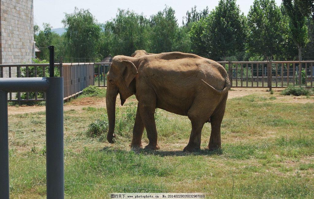 大象 动物园 石家庄动物园 像 白象 园林 野生动物 生物世界