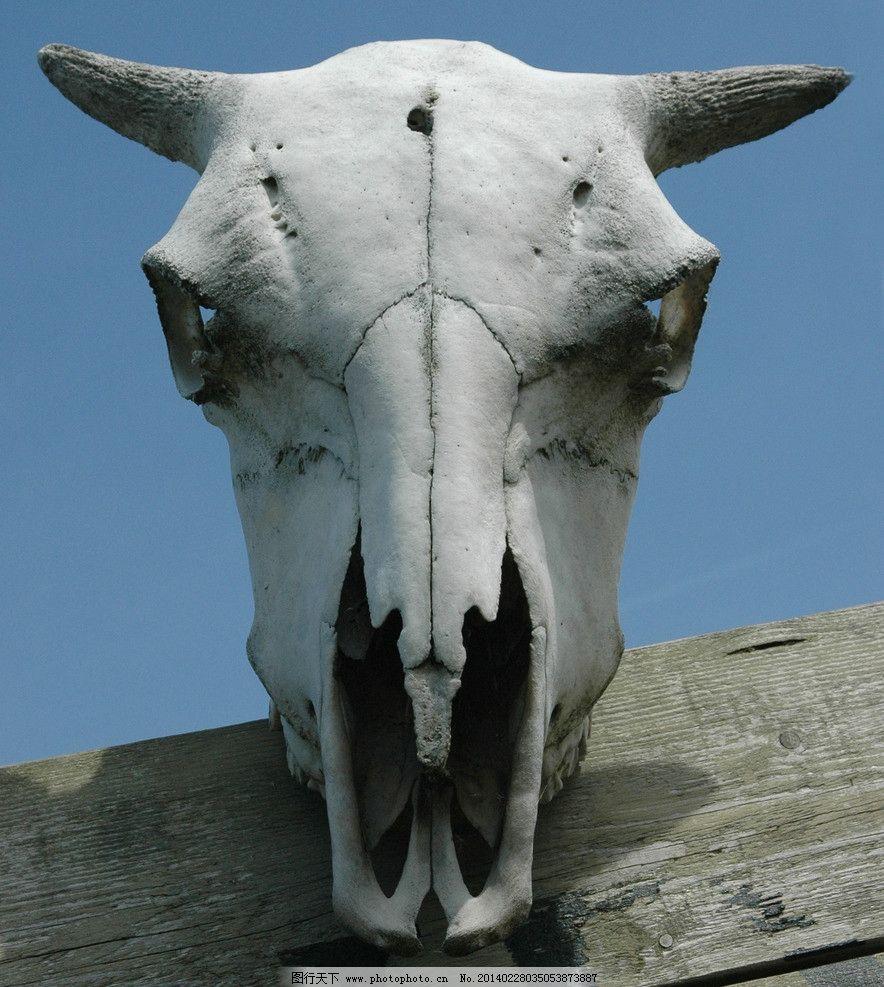 烟 烟雾 3d贴图 3d材质 黑 寺庙 佛像 骨头 牙齿 牛头骨 动物头骨