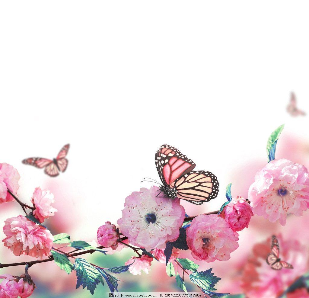 鲜花蝴蝶 鲜花 蝴蝶 飞舞 花朵 花卉 春天背景 春季背景 春天风景