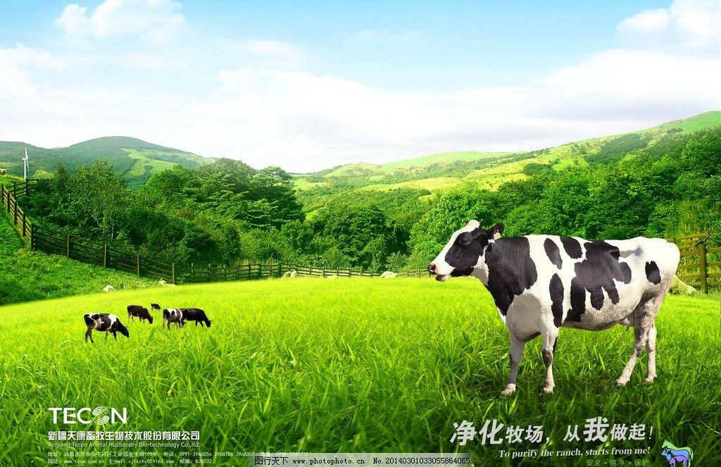 奶牛牧场 草地 蓝天 山 动物 新疆天康 天康生物 源文件