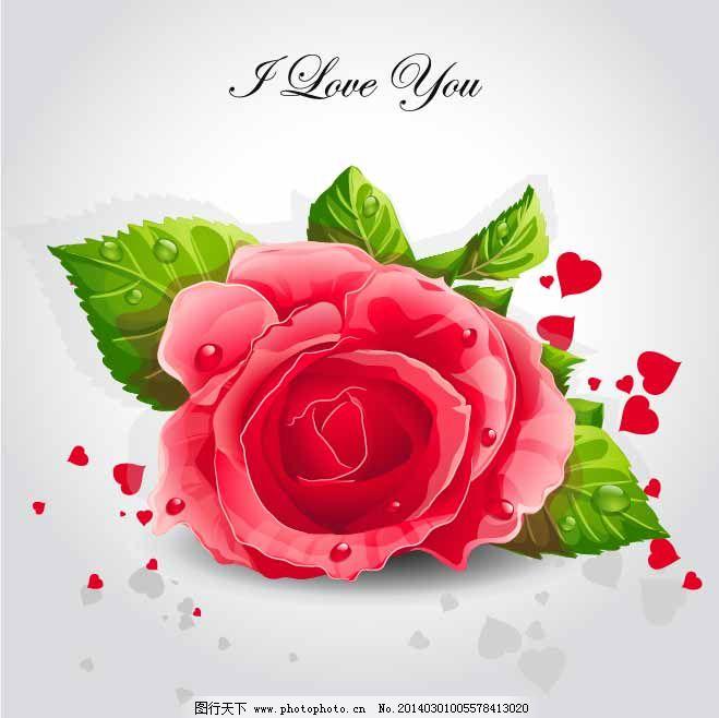 叶子 红色 玫瑰花 水珠 叶子 心形 植物 花朵 花 花蕊 花卉 花瓣 矢量