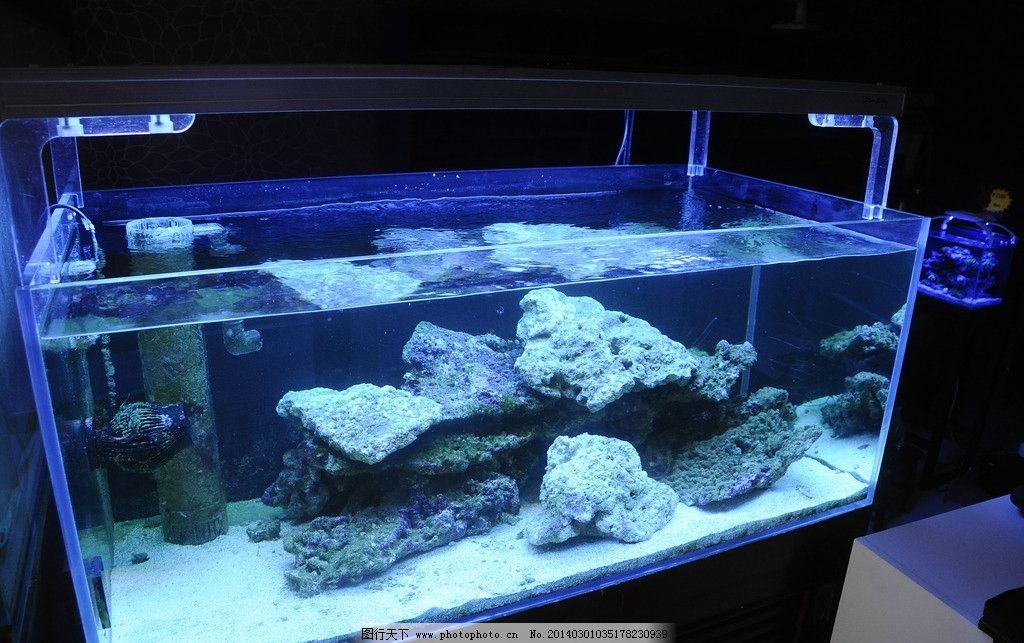 海水鱼缸 海缸 观赏珊瑚 海水鱼 造景 海洋生物 生物世界 摄影 300dpi