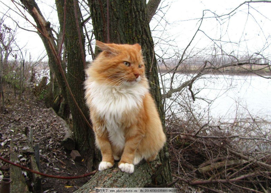 小猫 花猫 猫咪 动物 生物 生物世界 家畜家禽 家禽家畜 摄影 180dpi