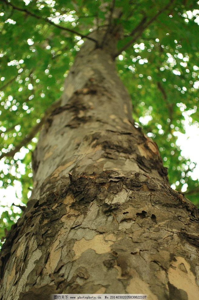 大树图片_树木树叶_生物世界_图行天下图库