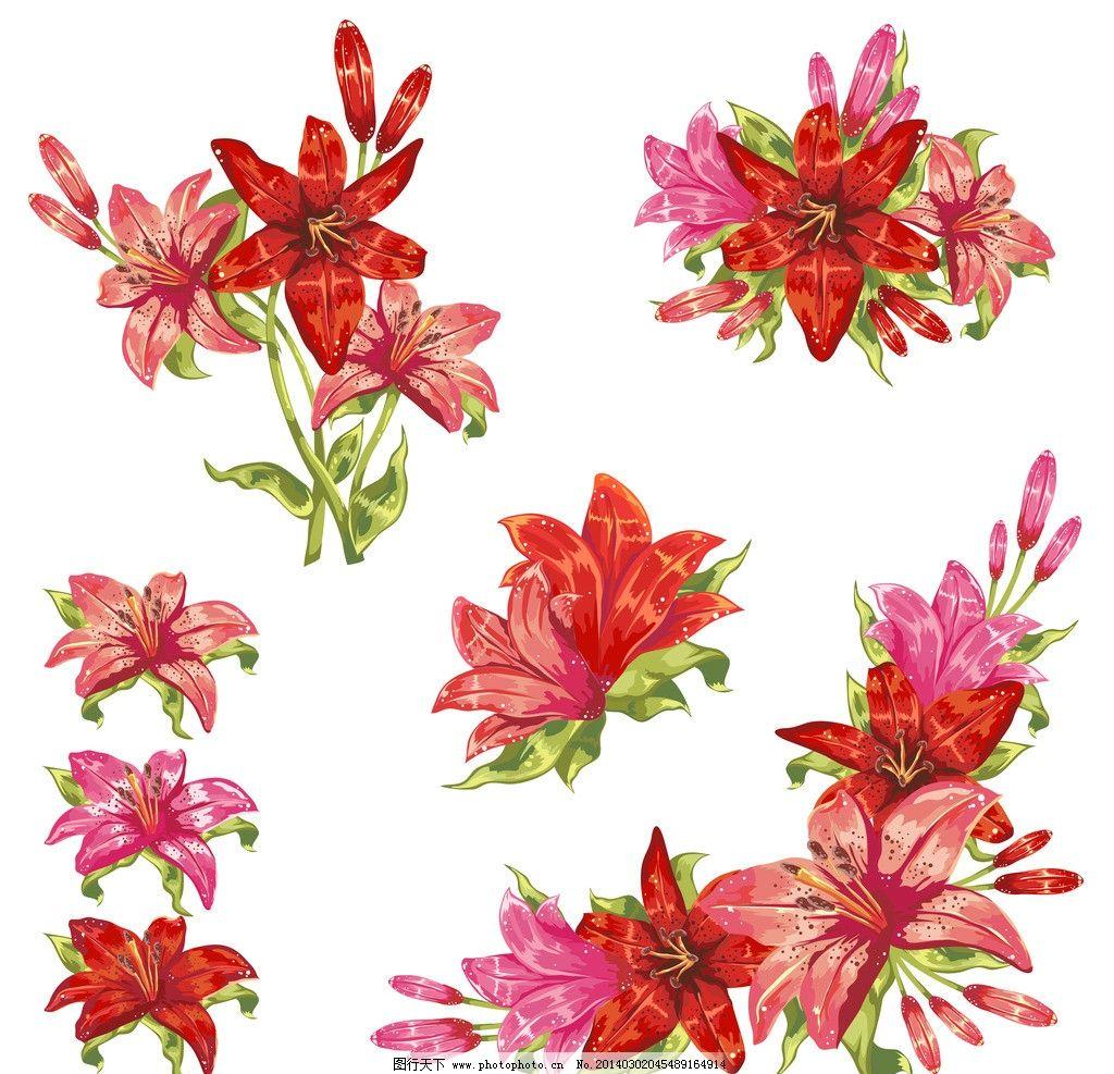 百合花 手绘花卉 花卉 花纹花卉 红花 鲜花 绿叶 花草背景 花草 生物