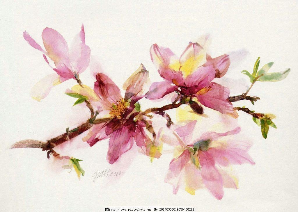 水彩花卉 花朵 花头 手绘