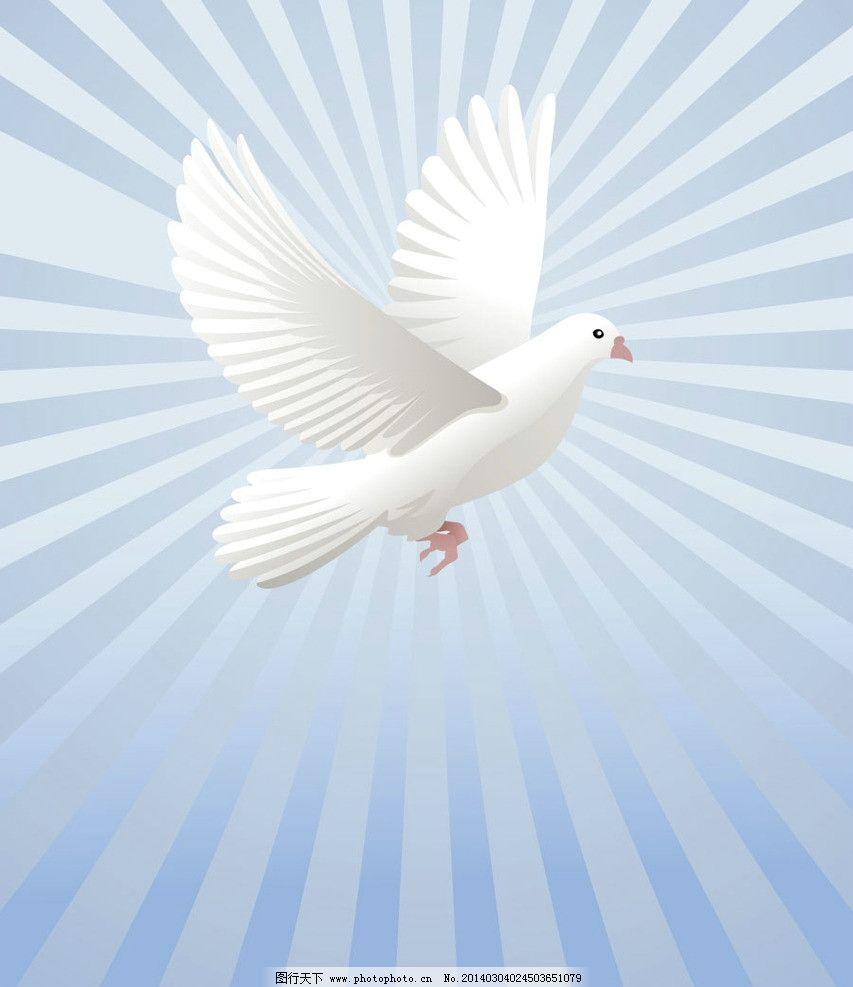 和平鸽 白鸽 信鸽 鸽子 和平 家禽家畜 生物世界 矢量 eps