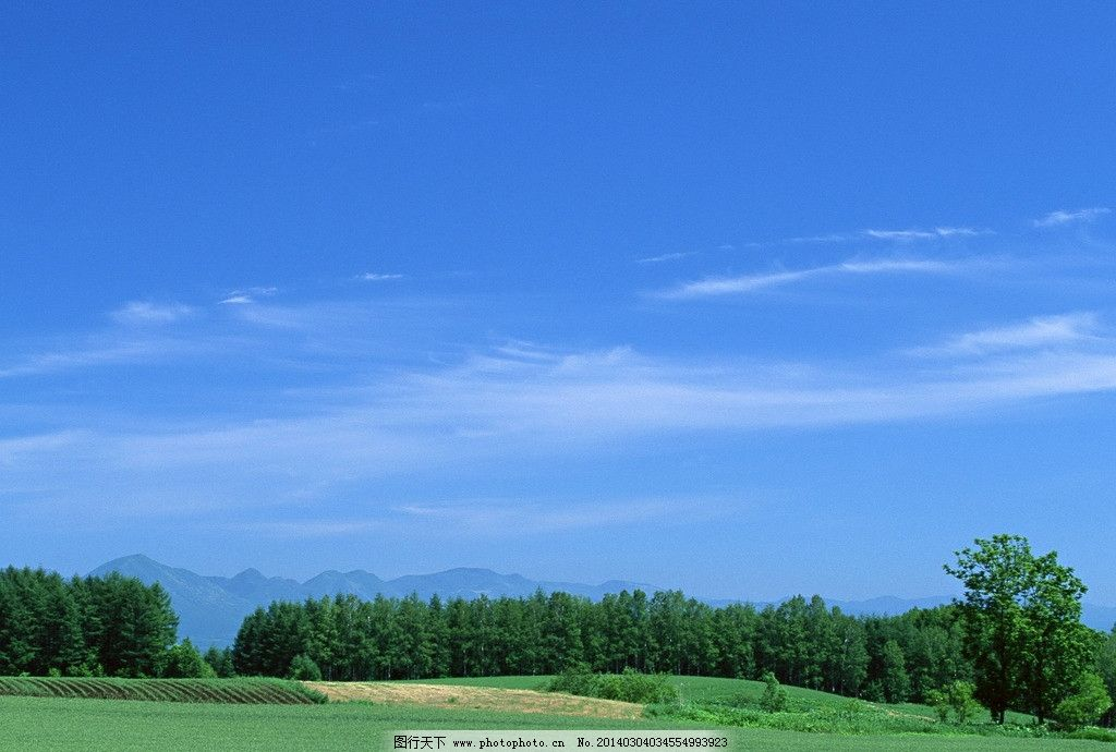 蓝天白云 天空 云朵 晴空万里 草地 生机盎然 绿地 绿草地 树林
