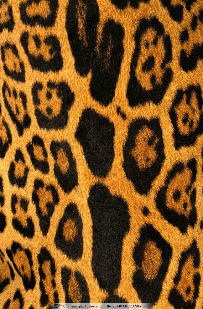 豹纹 高清 虎纹 老虎 动物纹路 纹路 豹 野生动物 生物世界 摄影 72