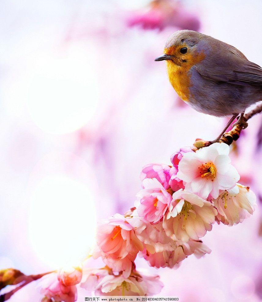 春天小鸟图片大全
