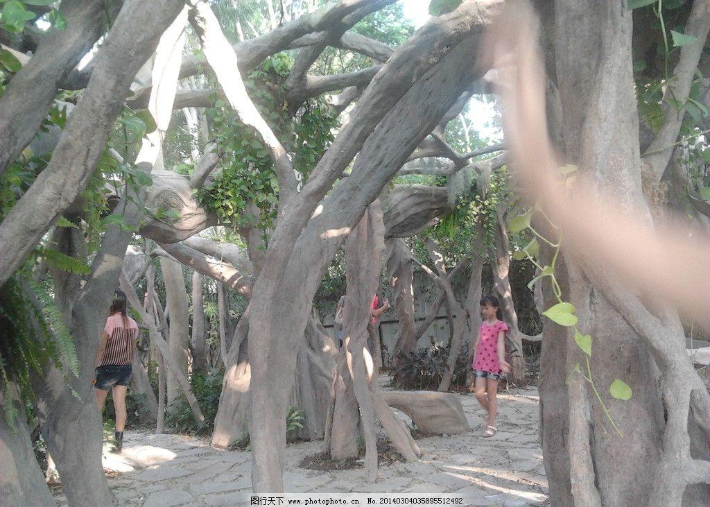 树根 公园 绿荫 树叶 近景 摄影 生物世界 树木树叶 72dpi jpg