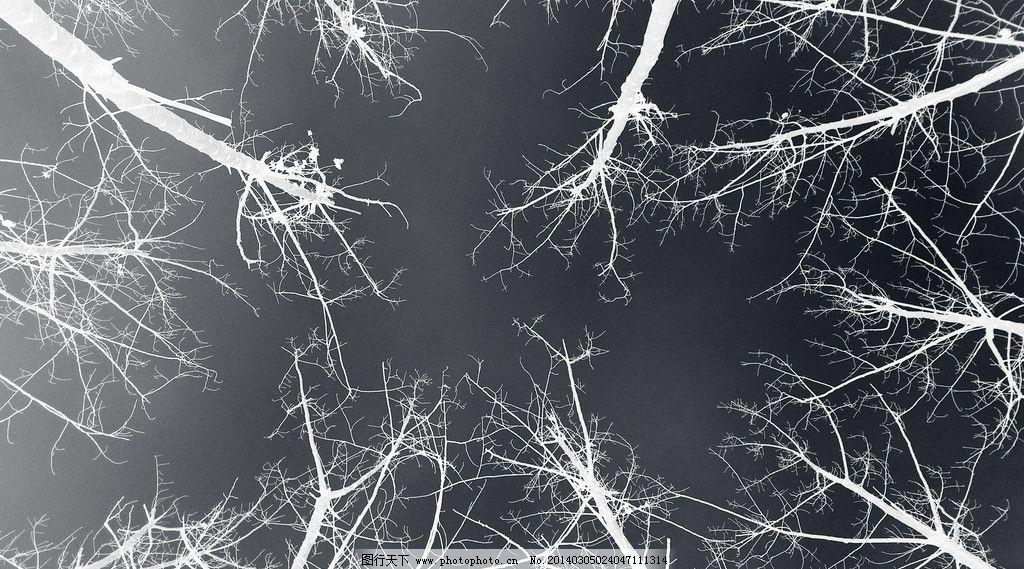 黑白树枝图片