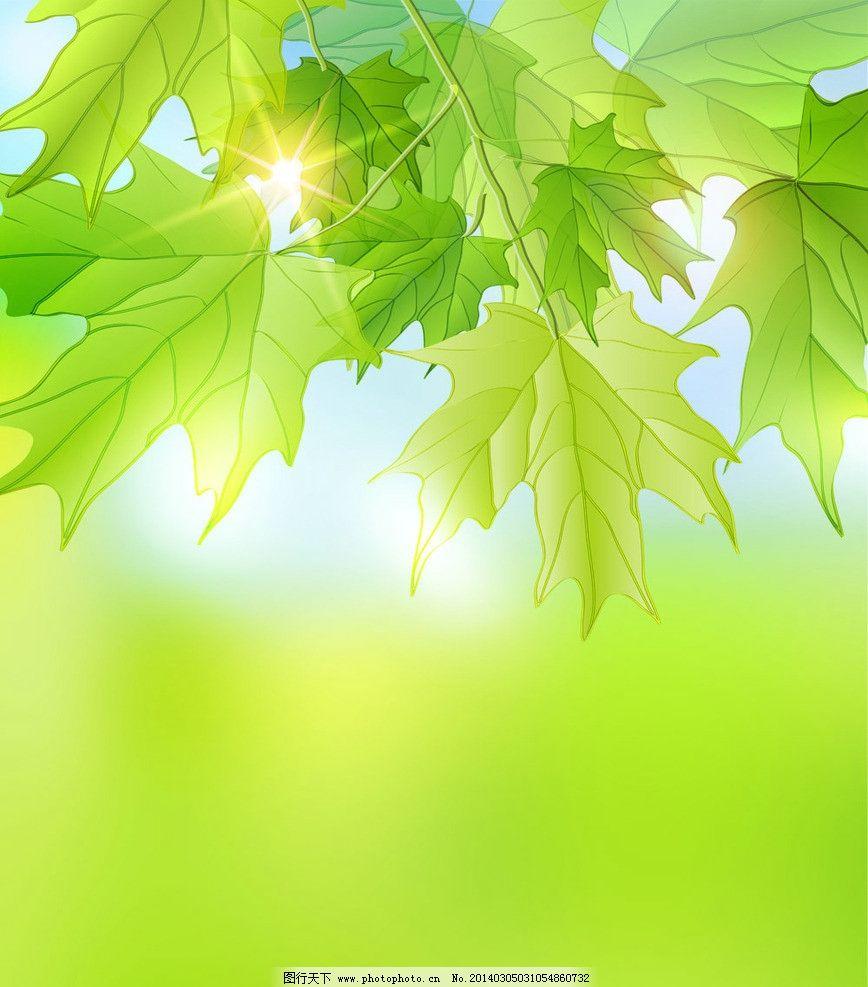 清新绿色 树叶 背景 叶子背景 叶子 绿叶 梧桐树叶子 树叶背景 手绘树图片