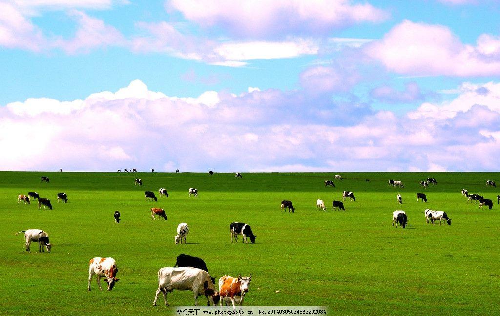 牧场最贵的动物