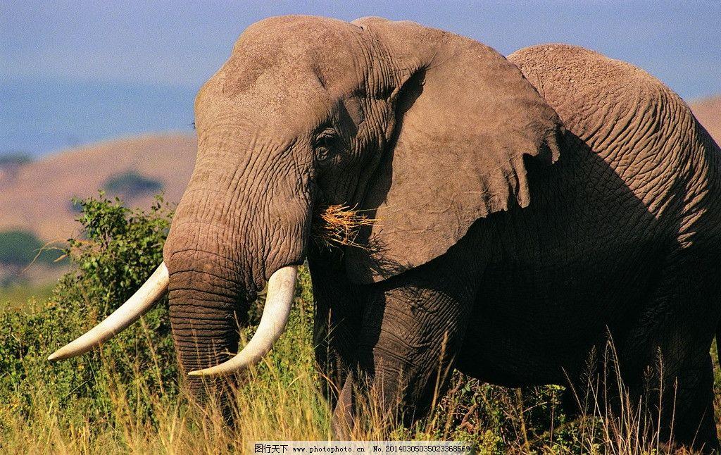 大象里16只动物图片