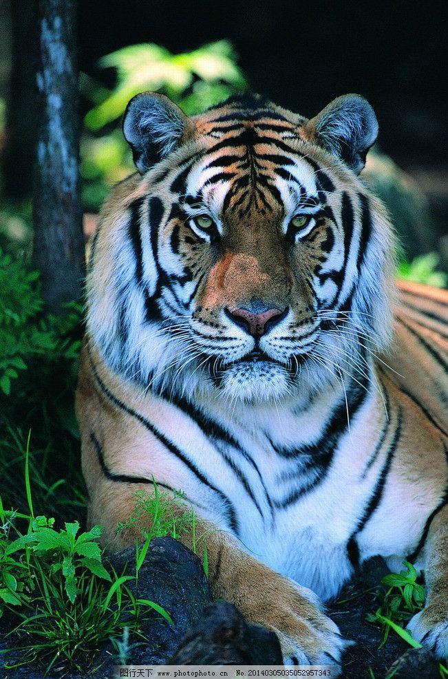 动物图片 野生动物图片
