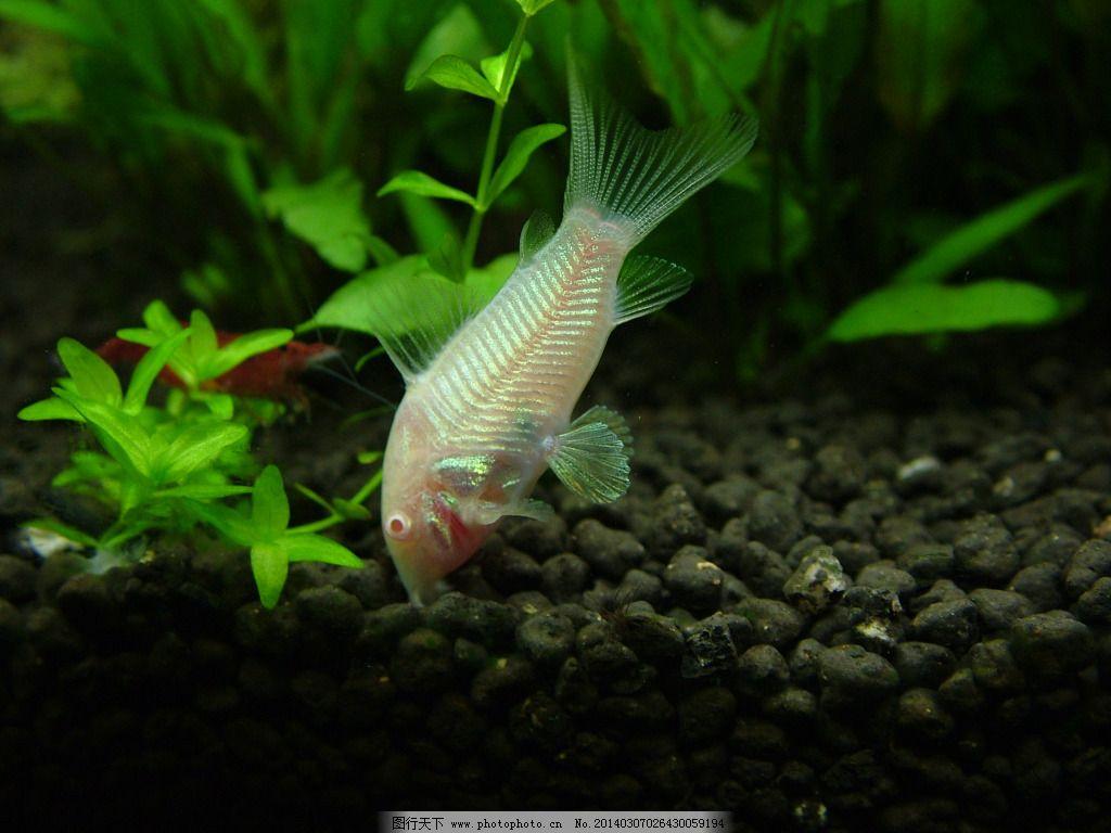 壁纸 动物 水草 水生植物 鱼 鱼类 1024_768