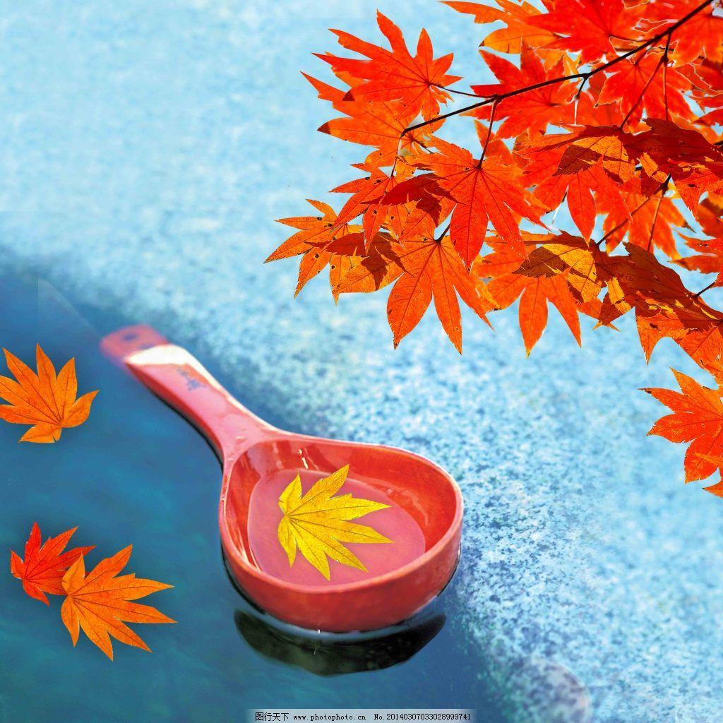 枫叶的图片 枫叶图 郊外风景 落叶 油画风景 枫叶风景图片枫叶 枫叶的