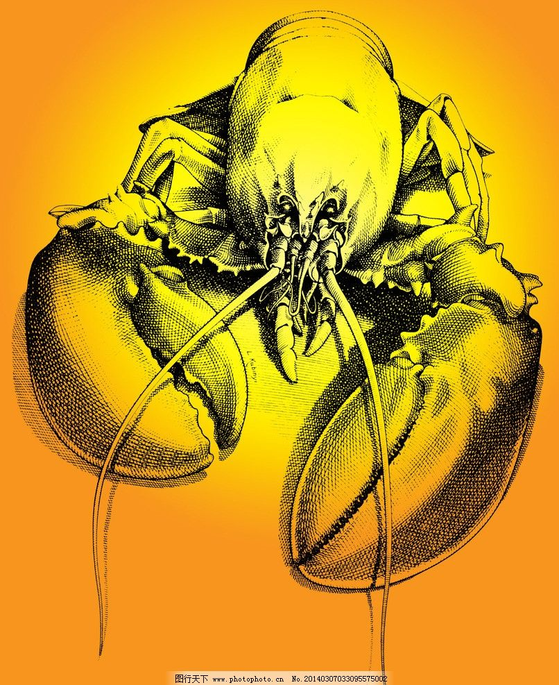 插画龙虾 大虾 动物 海鲜 手绘作品 绘画 色彩艳丽 形象逼真