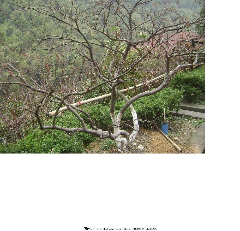 春天风景素描画大树