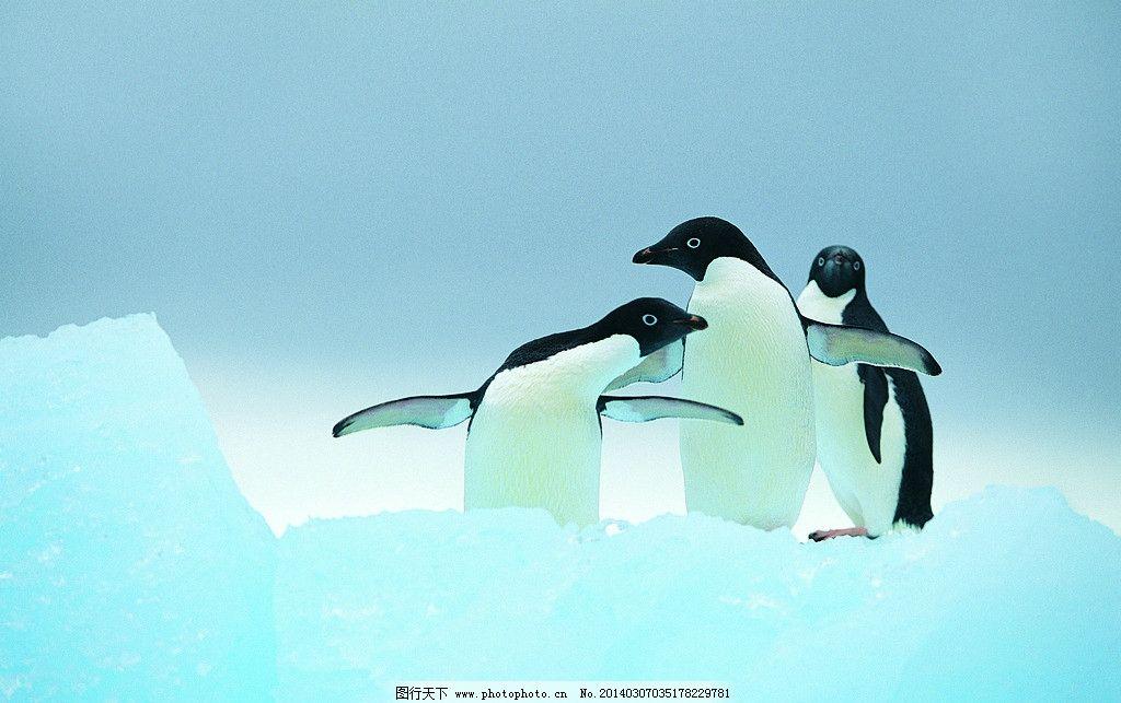 企鹅 冰山 雪地 奔跑 敏捷 张开翅膀 摄影