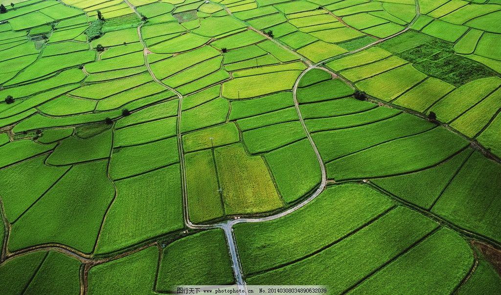 绿色田野 农田 灌溉 土地 庄稼 大地 风景 自然风景 自然景观
