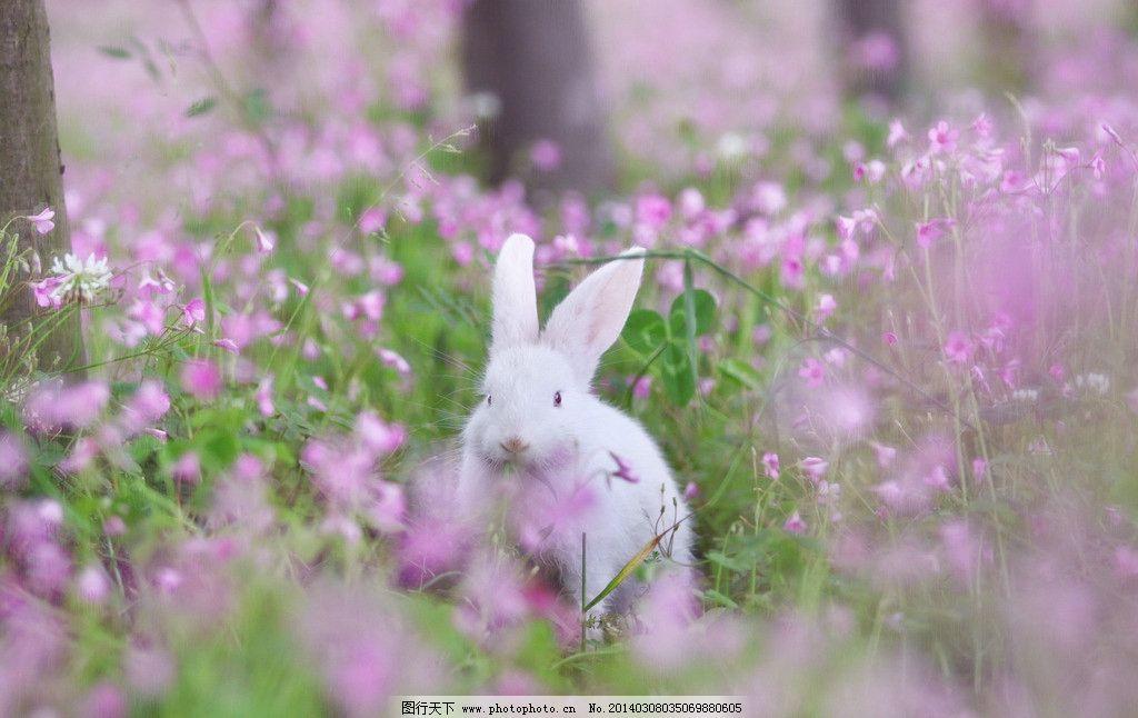 兔子 可爱 梦幻 花 甜美 野生动物 生物世界 摄影 72dpi jpg