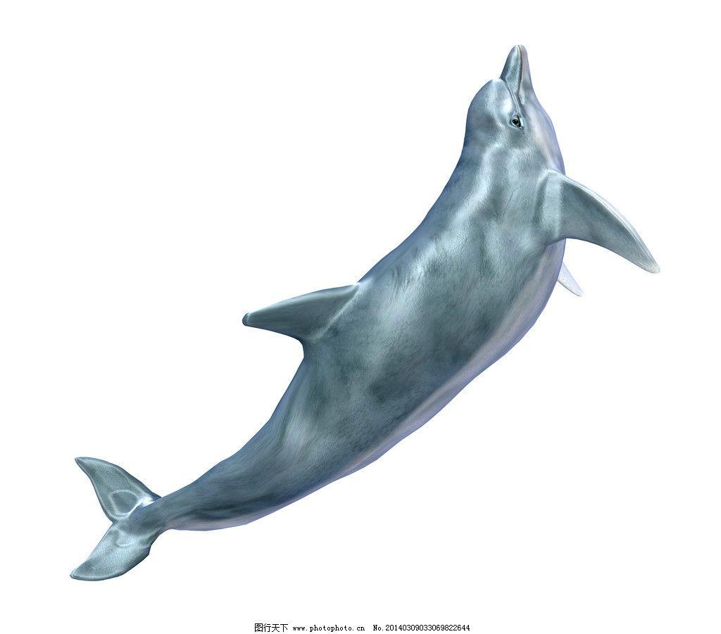 海豚 海洋精灵 海豚表演 濒危 野生动物 有益野生动物 珍惜动物 稀有