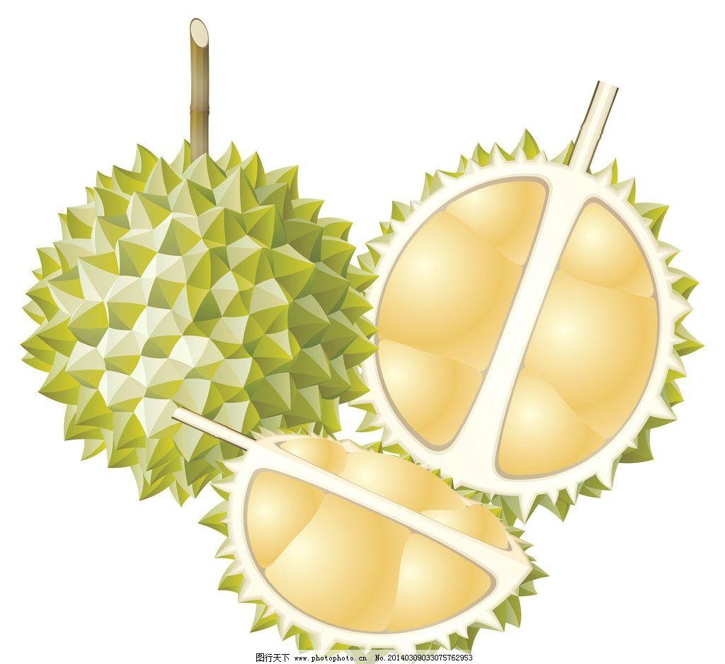 榴莲 手绘 水果 食物 食品 美食 瓜果 静物 可口 诱人 新鲜 水果静物图片