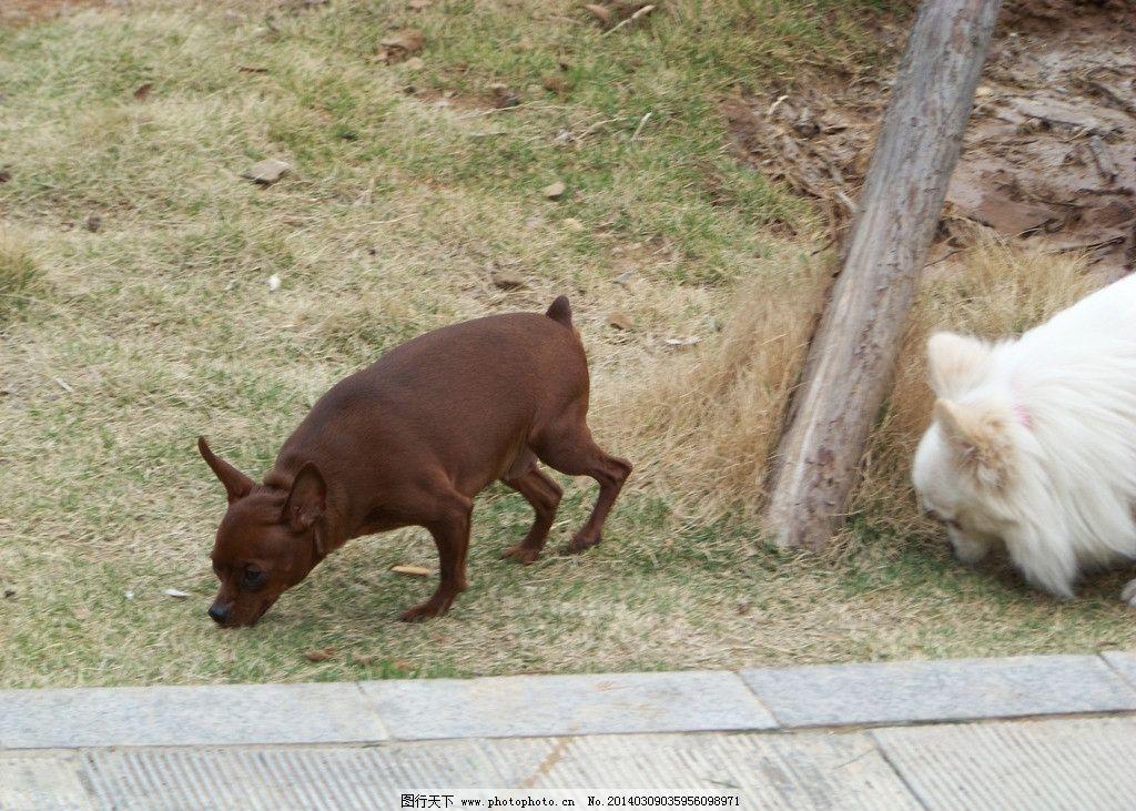 鹿犬图片图片