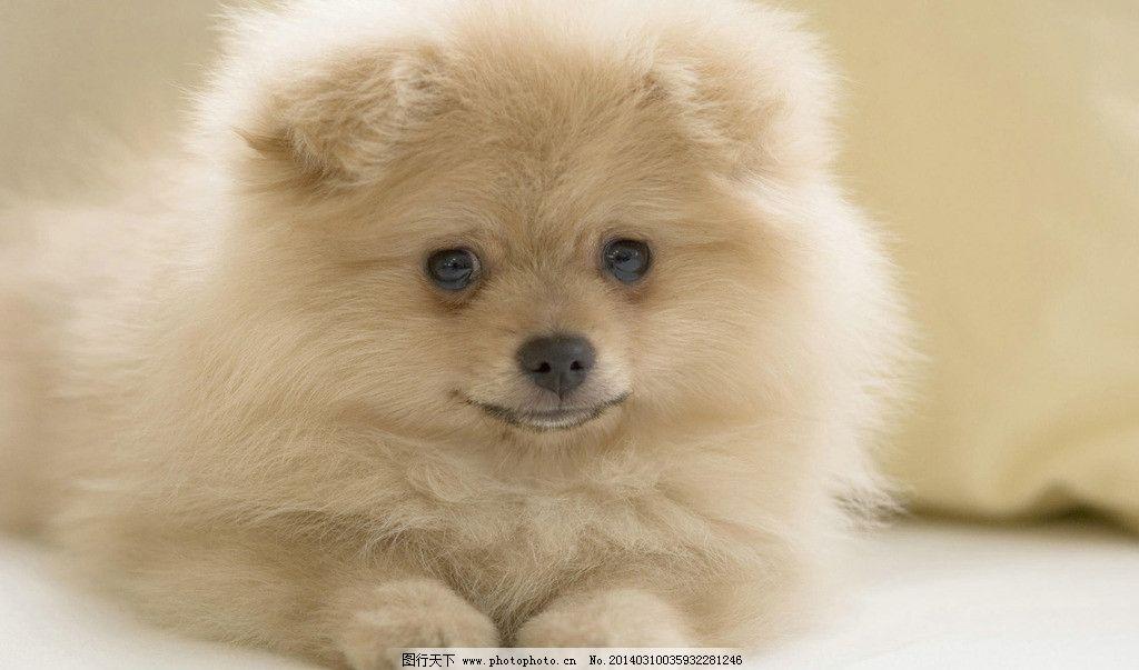 狗狗壁纸 温馨 狗狗 壁纸
