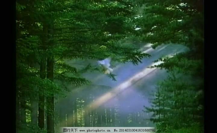 森林视频 森林风景视频 风景画视频 阳光视频 绿色树木视频 视频素材
