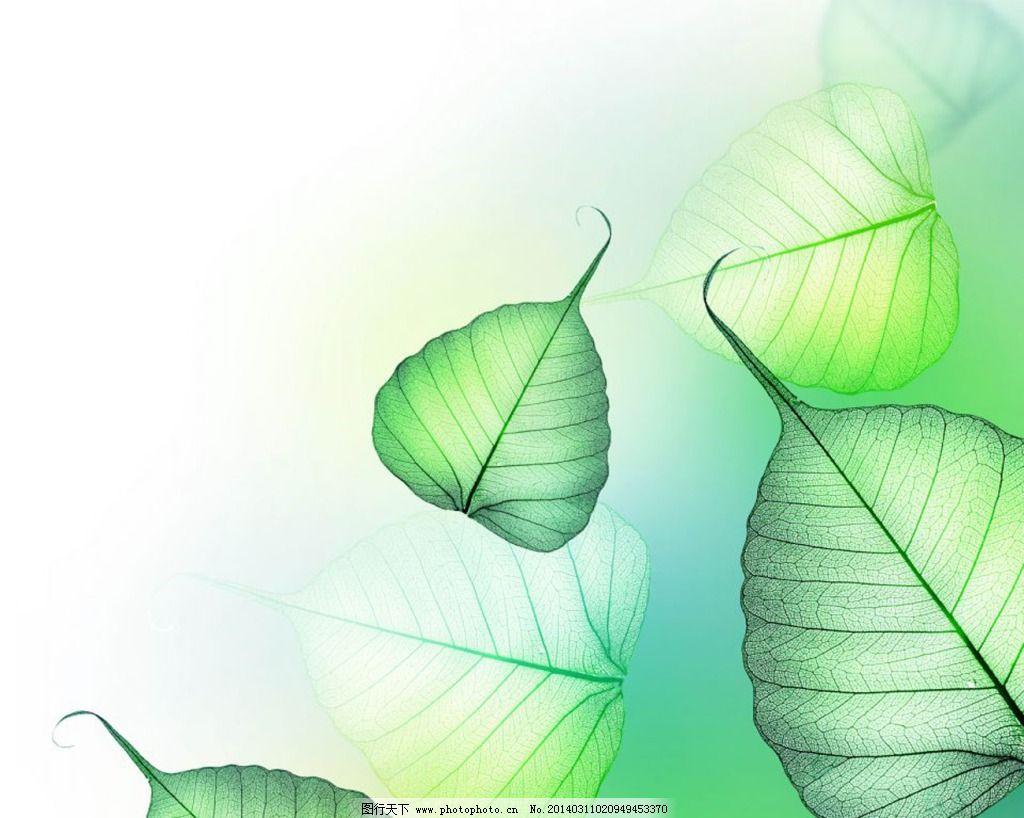 绿色树叶免费下载 背景 绿色 树叶 绿色 树叶 背景 图片素材 背景图片