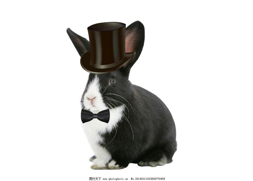 黑兔子 绅士兔子 可爱 小动物 戴礼帽兔子 矢量素材 其他矢量