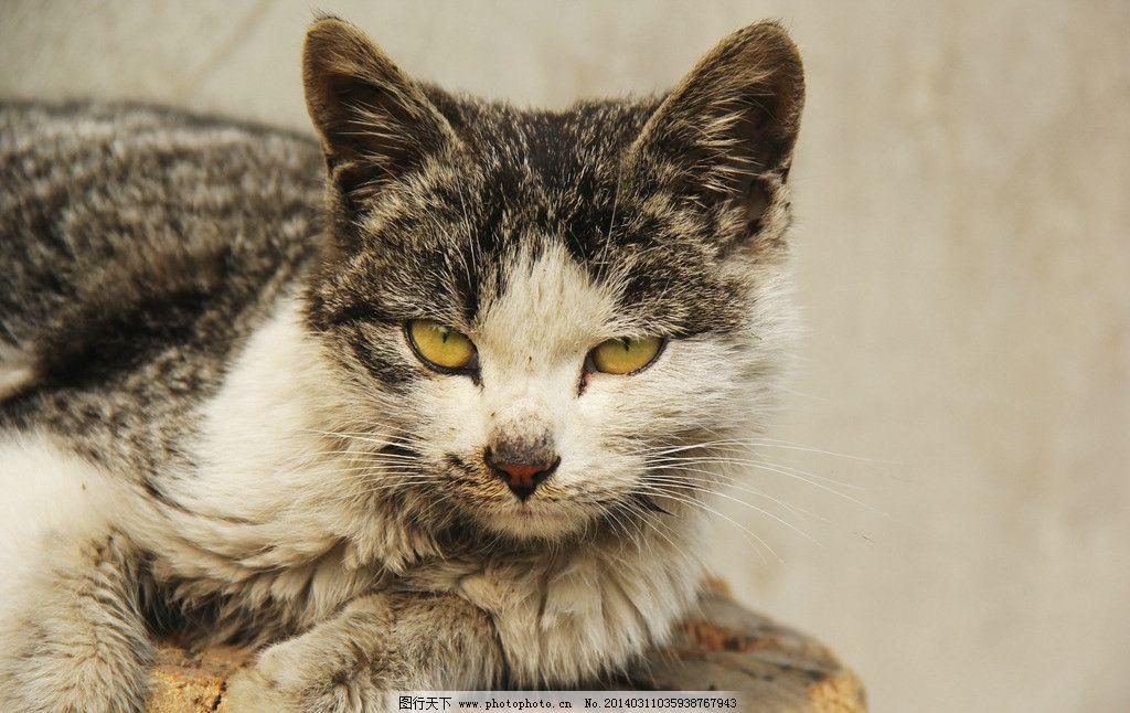 动物 猫 宠物 表情 野猫 狰狞 牙齿 恐怖 狸猫 家禽家畜 生物世界