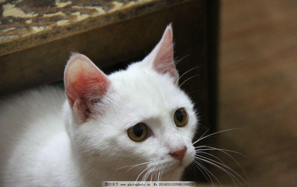 白猫狮子岛隐藏建筑