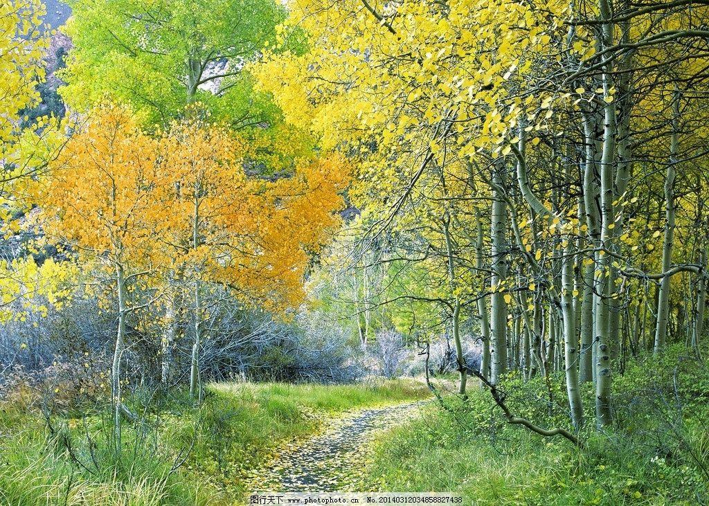 自然风景 湖泊 山脉 树林 优美 花海 白花 蓝天 白云 红花