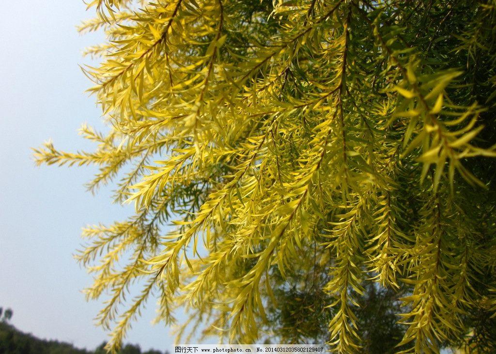 嫩绿树叶 树叶 天空 嫩叶 绿 叶子 树木树叶 生物世界 摄影 180dpi