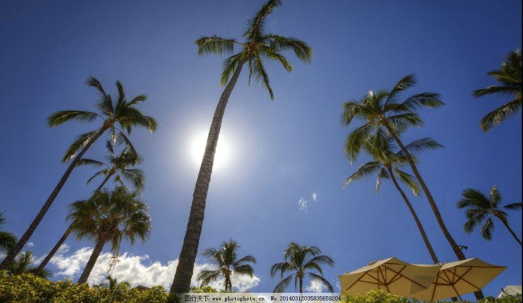 椰子树 椰树 遮阳伞 太阳伞 夏天 烈日 炎热 炎夏 海南岛 蓝天 白云