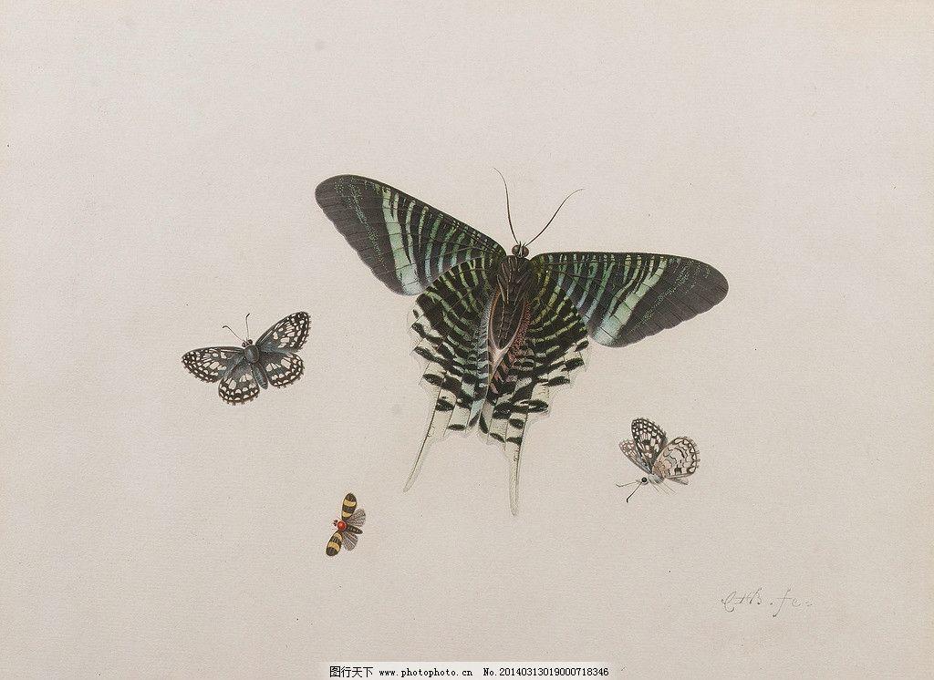 蝴蝶 画片 19世纪 水彩 素描画 白色调 水彩画 绘画书法 文化艺术
